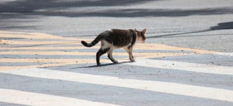 Projeto de Lei de Célio Studart pune motorista que atropela animal propositalmente